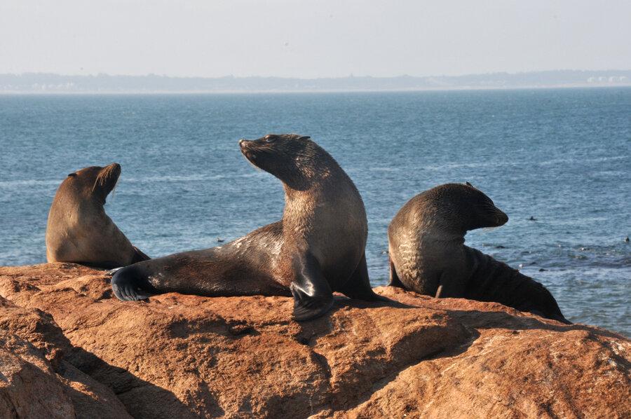 isla de lobos área marina protegida