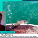 pesca tiburones uruguay